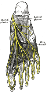Image from Gray's Anatomy of the nerves of the foot