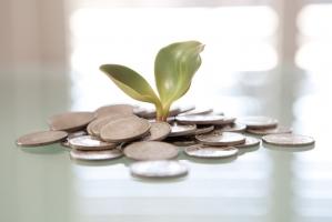 money_plant_515829