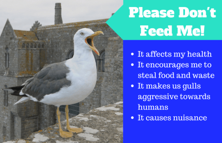 Please don't feed seagulls