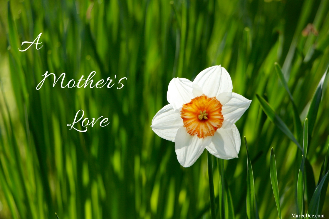 A Mother's love is somethingthat no one can explain,It is made of deep devotion