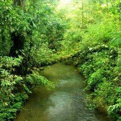 Растения джунглей