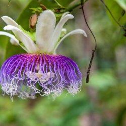 Ретрит аяхуаска