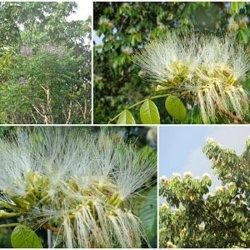 Попробовать Аяхуаску и другие растения Амазонии