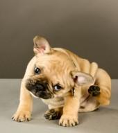 itchydog