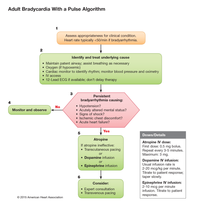 ACLS Revision: Symptomatic Bradycardia
