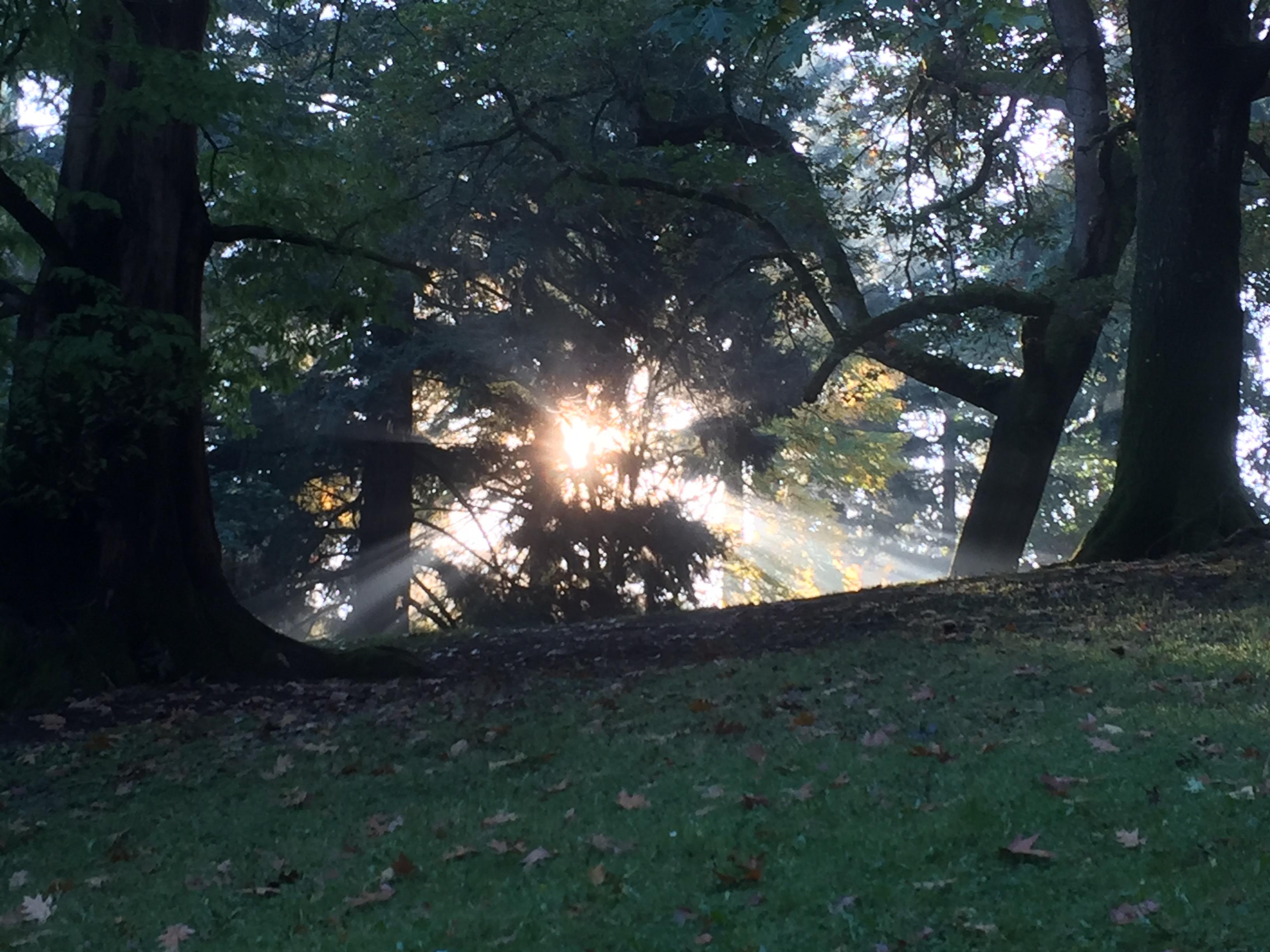 Emerging Radiance