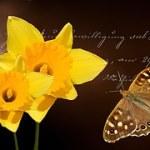 daffodils-673784__180.jpgGEN