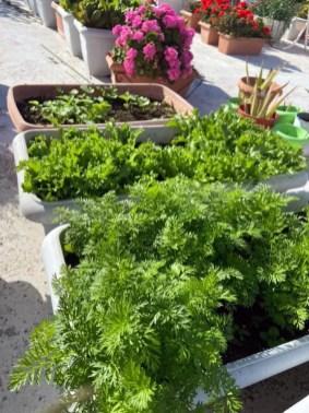Τα λαχανικά σε μικρούς κήπους