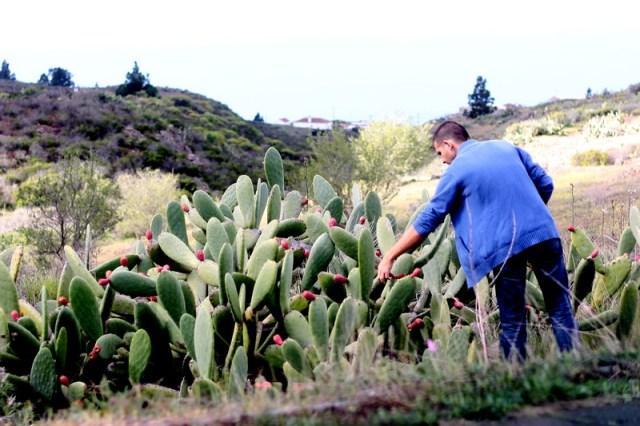 Dupa piata, am urcat pe munte sa culegem niste fructe de cactus. Bine ca au tepi, ca altfel as manca fara limita.