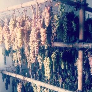 vin santo in Chianti