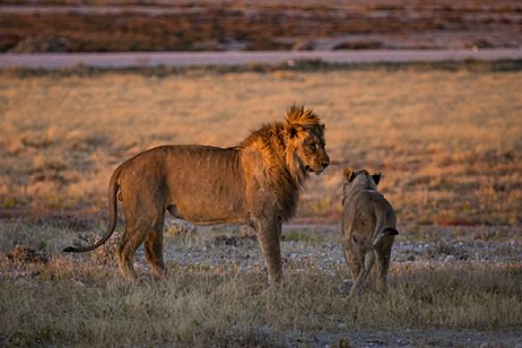 NAMIBIA JULIO