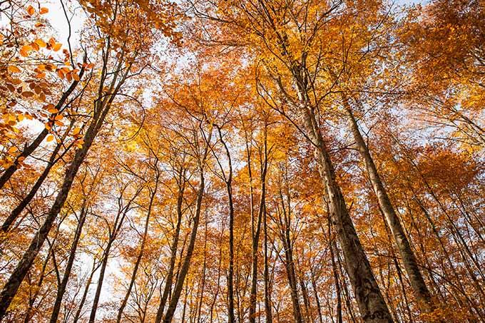 fageda_den_jorda_garrotxa_catalonia_spain_beech_landscape_fall_autumn_680