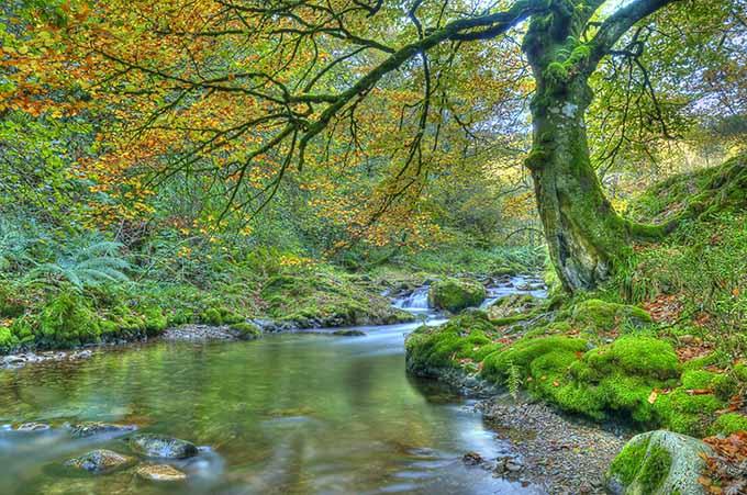 muniellos_forest_spain_fall_autumn_asturias_680