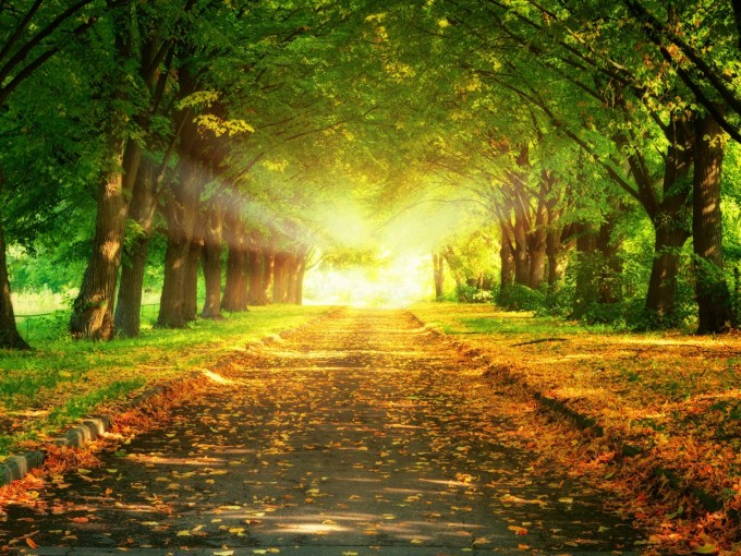 park-road-trees-light-sun-paints-colors