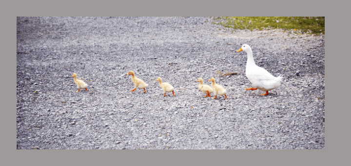 The Future Starts Today: Getting Our Ducks In Row for Jesus