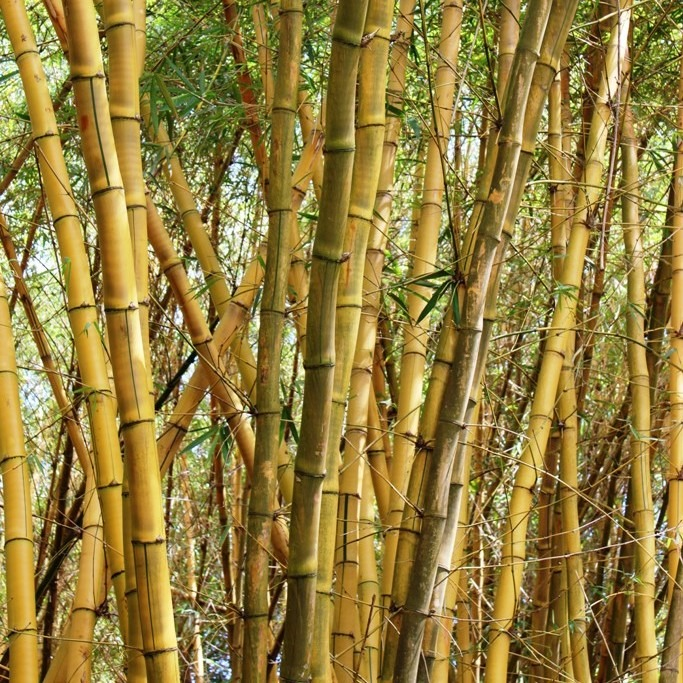 Day 165: Bamboo Room At Allerton