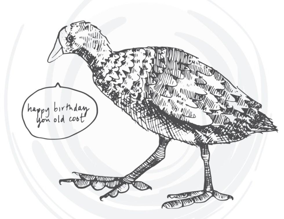 bird-cards-web-09