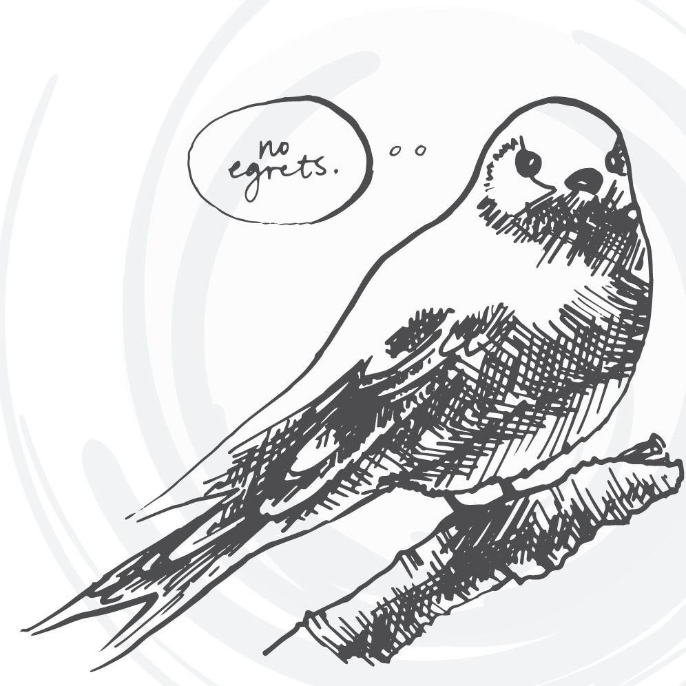 Day 296: Bird Illustrations, Part 2