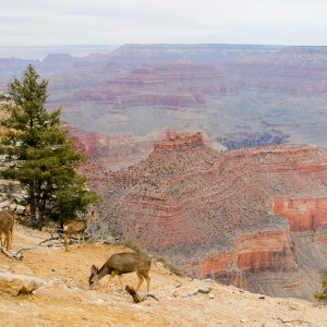 Zion, Tuscon And Grand Canyon March 2016 02