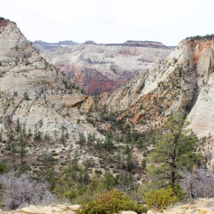 Zion, Tuscon And Grand Canyon March 2016 14