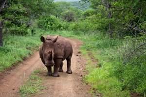 © Thanda Private Game Reserve