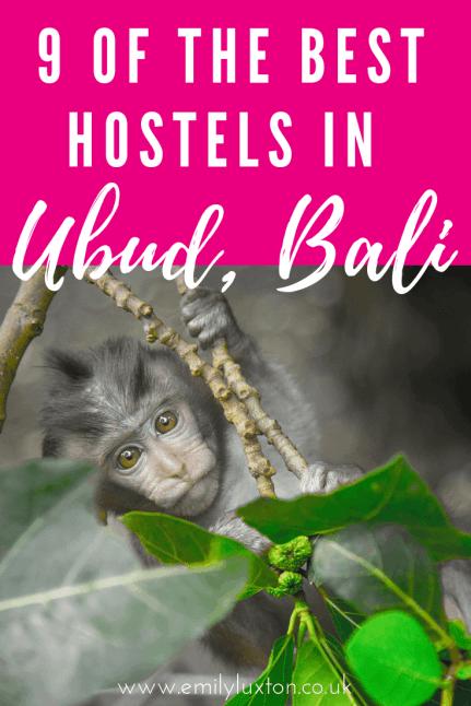 Best hostels in Ubud