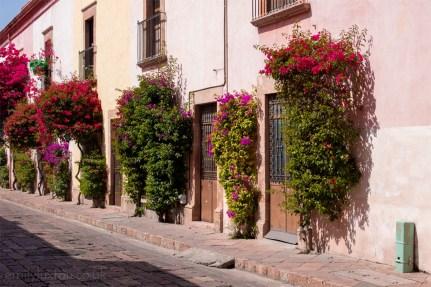 Flower walls in Queretaro