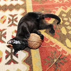 Batman playing with ball of yarn