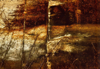 Photo - Autumn (vines on wall), 1978