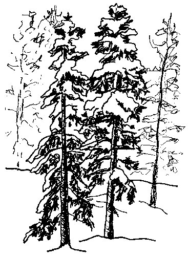 Tree, Lake Tahoe, NV, 1993