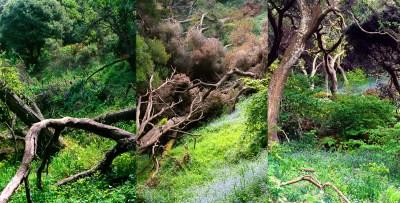 No. 3, Reverie, Landscape Triptych