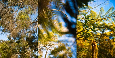 No. 15, Reverie, Landscape Triptych