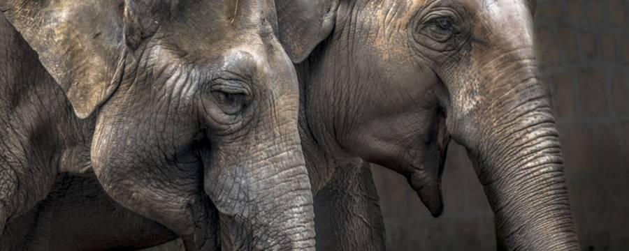 Eminflex, insieme per gli elefanti