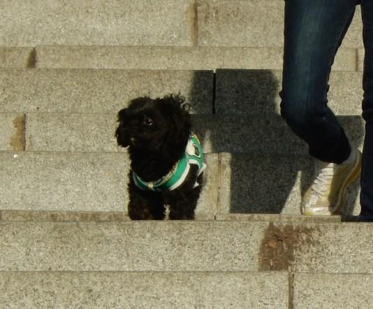 Korean dogs in coats