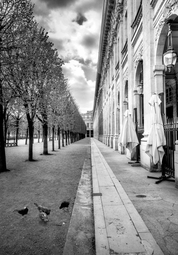 Photo Noir et blanc Jardin du Palais Royal Pigeons