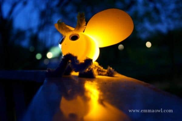 Fireflies with a glowing bum
