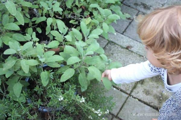 Picking Herbs from the Garden