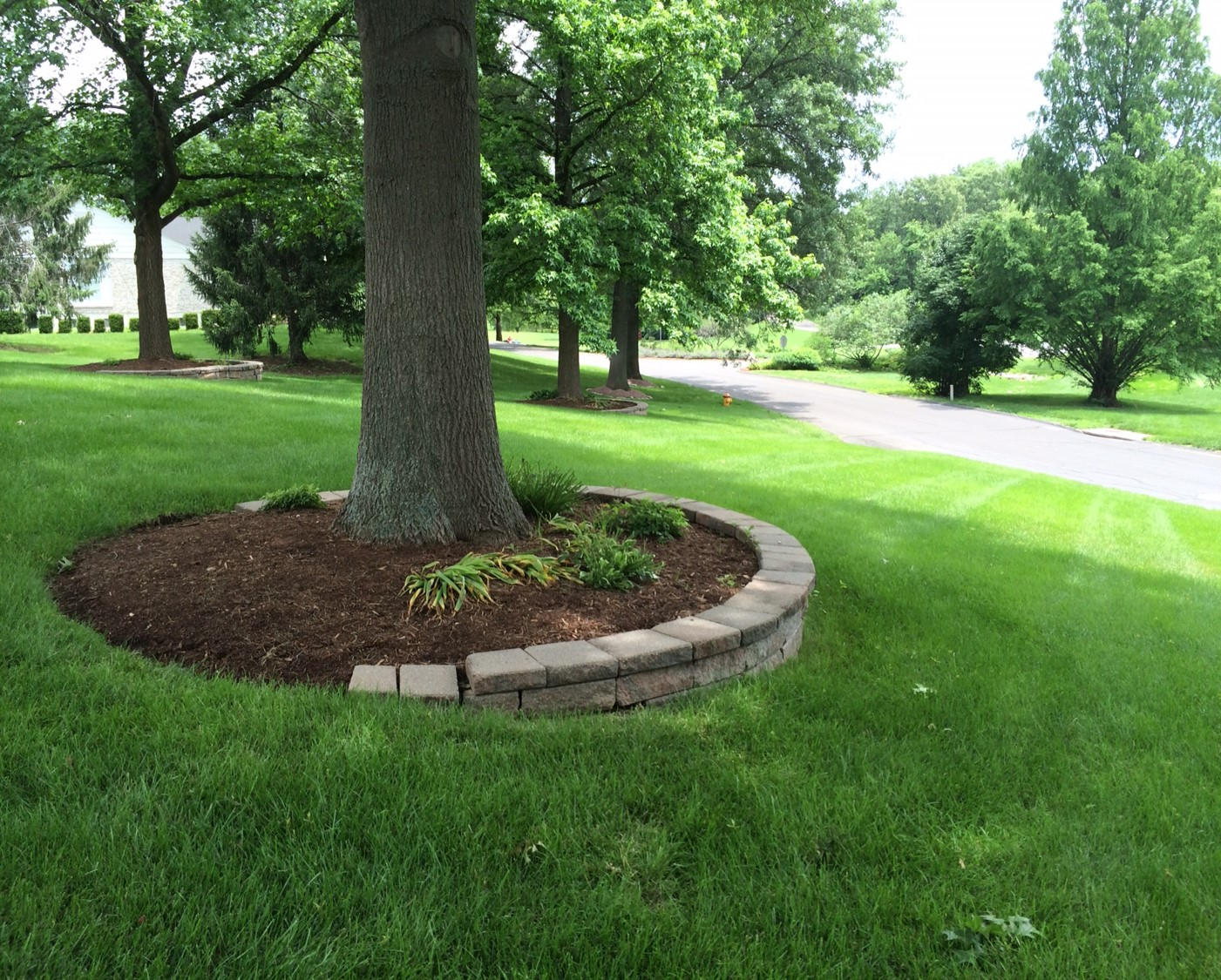 How To Apply Mulch To Your Trees | Emma Tree Service on Backyard Landscaping Near Me id=81868