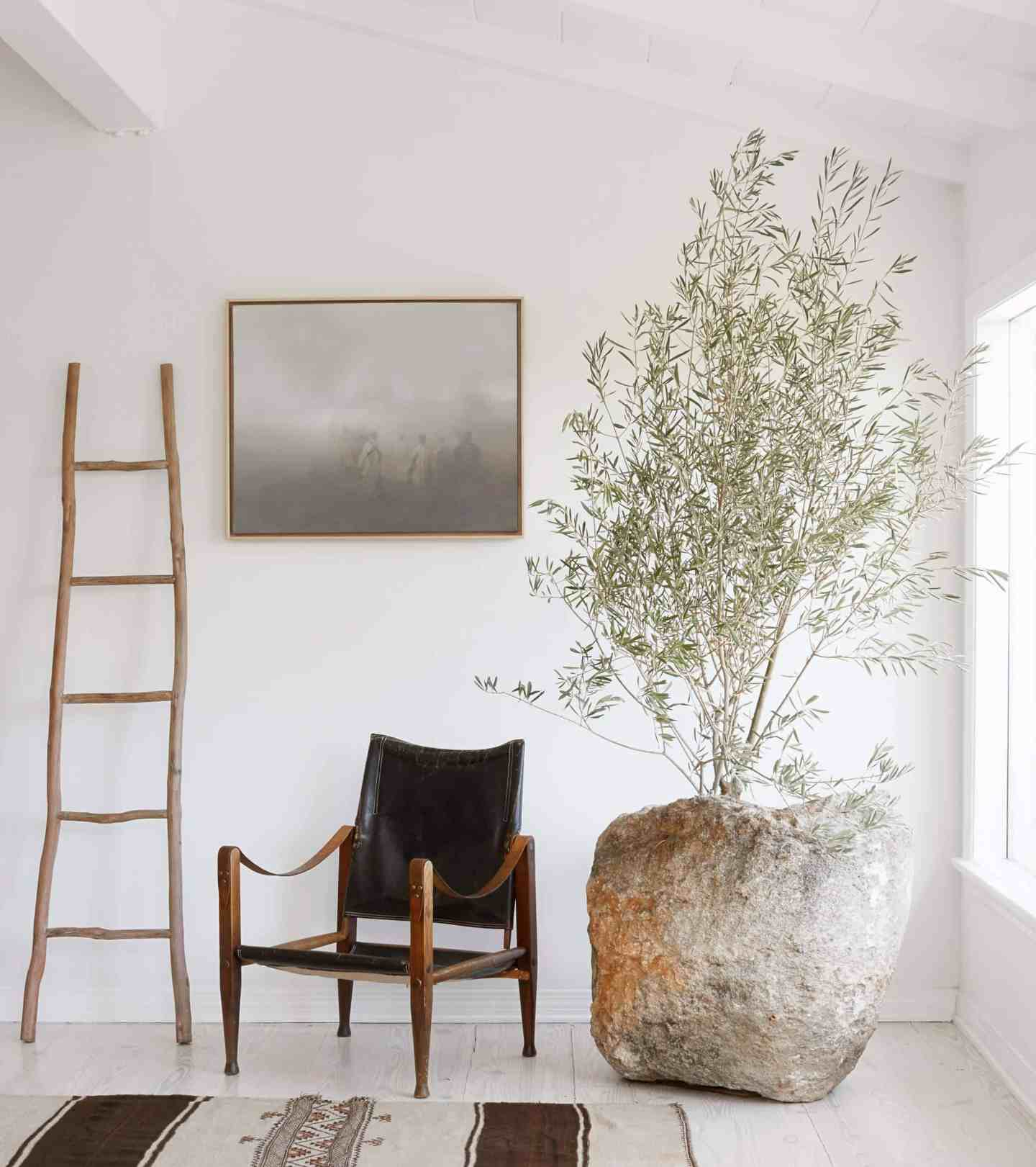 Living room with olive tree by Emily Henderson