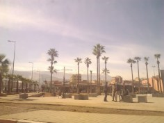 Beni Mellal in a nutshell--palm trees with the mountains behind.