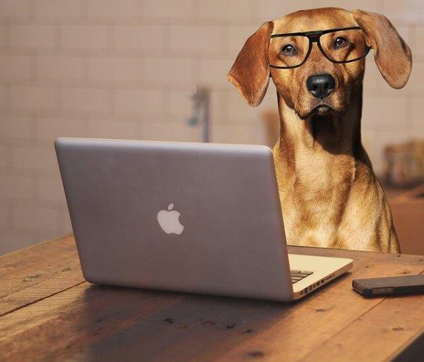 Animal Blog - Top Pet Business Ideas