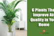 Plants-That-Improve-Air-Quality-in-Your-Home
