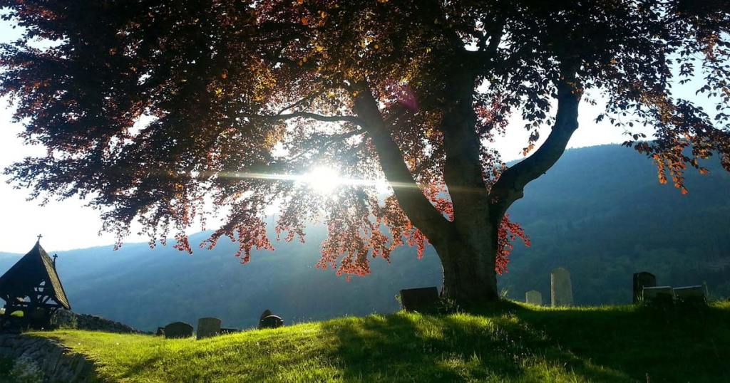 A tree stands tall and strong over an old cemetery at the top of a hill, while the sun shines through the branches.