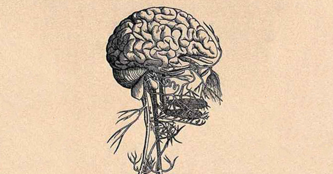 An illustration, ink on yellowed paper, of a brain and nervous system.