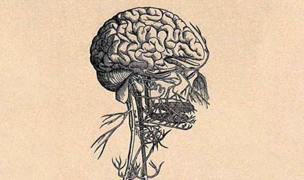 Science of us: I Now Suspect the Vagus Nerve Is the Key to Well-being