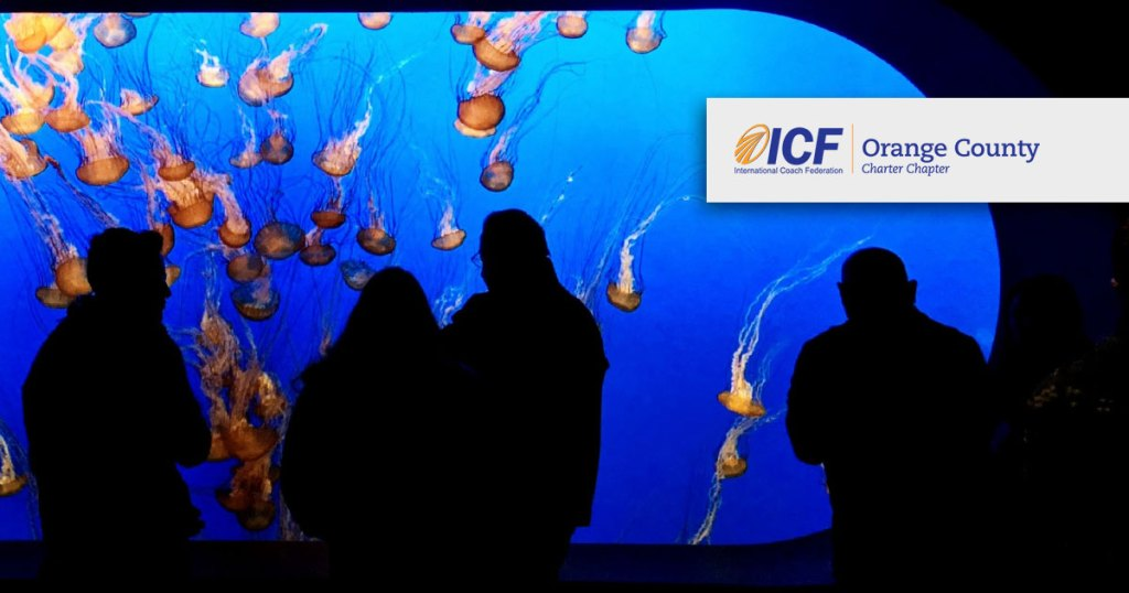 ICF Orange County chapter over a photo from inside an aquarium looking at jelly fish.