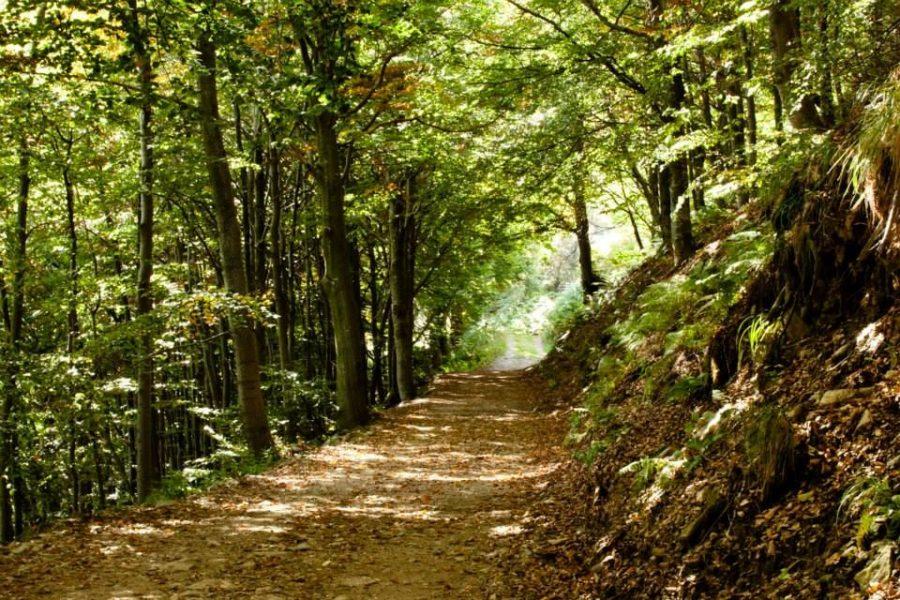 Passeggiare per i sentieri di collina nei dintorni di Torino