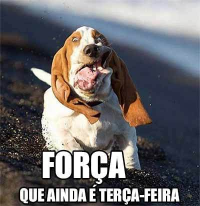 FORÇA
