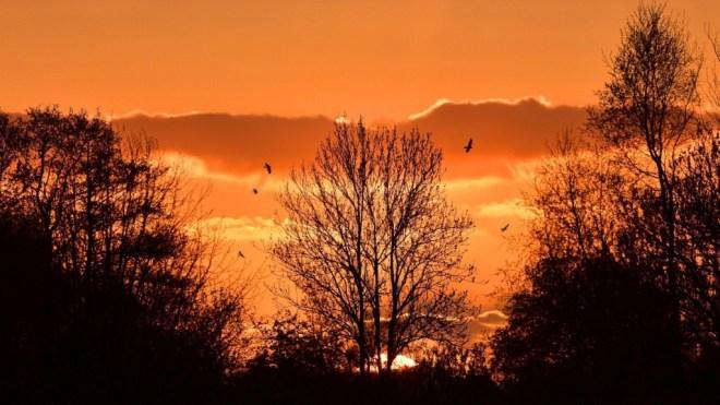 Sunset Mountains Trees Landscape Nature Orange Birds Sky Red Evening Afterglow Romantic Windows Wallpaper