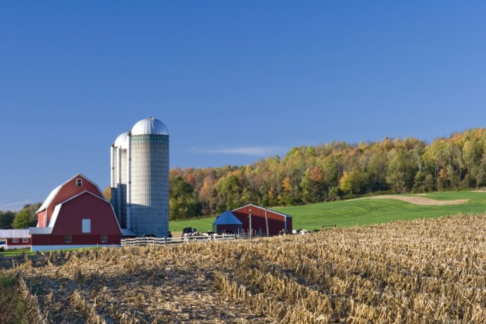 Dairy Farm in New York State in the evening in autumn.